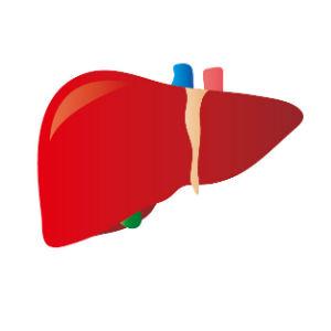 肝臓の治療