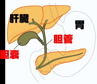胆道がんの名医・専門医26名 | 日本全国の名医・専門医一覧まとめ